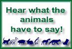 read animal quote