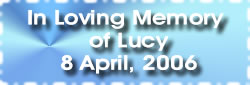 In Loving Memory of Lucy